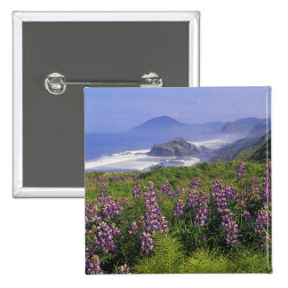 Lupine flowers and rugged coastline along pinback button