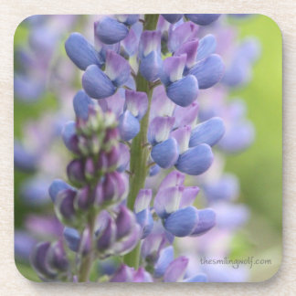 Lupine Flowers Coaster
