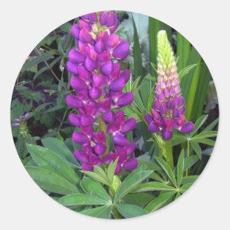 Lupine in the Perennial Garden Round Stickers