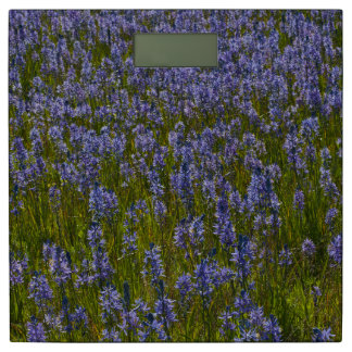 Lupine Meadow Bathroom Scale