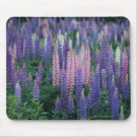 Lupine Mouse Pads