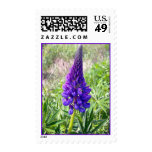 Lupine púrpura 1 sello