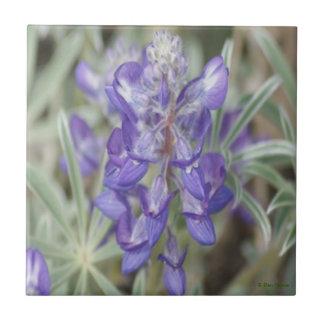 Lupine púrpura de la publicación anual de los Wild Azulejo Cuadrado Pequeño