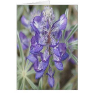 Lupine púrpura de la publicación anual de los Wild Tarjetas