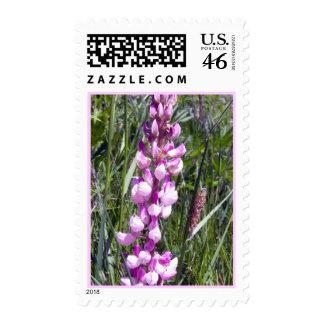 Lupine rosado 1 sello