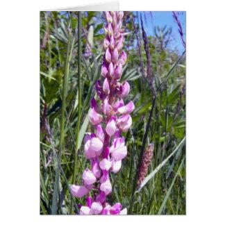 Lupine rosado 1 tarjeta de felicitación