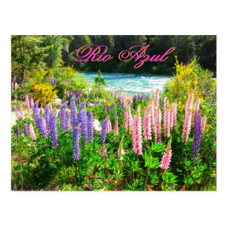 Lupines along the Rio Azul, Argentina Postcard