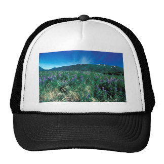 Lupines on Kodiak Trucker Hat