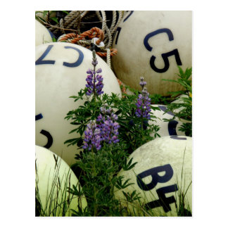 Lupins in the fishing buoys postcard