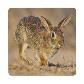 Lupulización del conejo de conejo de rabo blanco d posavasos de puzzle
