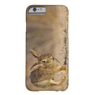 Lupulización del conejo de conejo de rabo blanco funda barely there iPhone 6