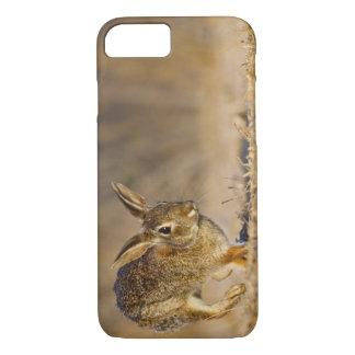 Lupulización del conejo de conejo de rabo blanco funda iPhone 7