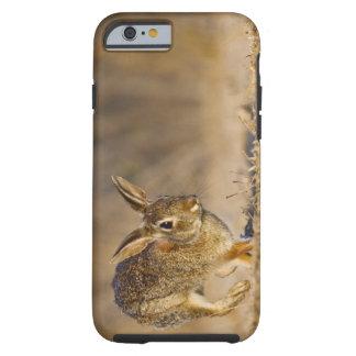 Lupulización del conejo de conejo de rabo blanco funda resistente iPhone 6