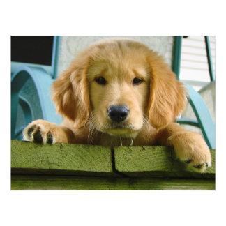 Lupus de Canis del perro de perrito del golden ret Impresión Fotográfica