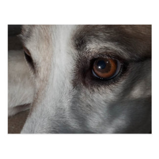 Lurcher Eye Postcard