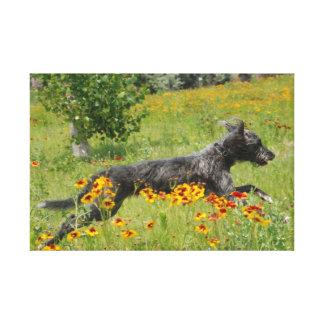 Lurcher Running Through A Flower Field Canvas Print