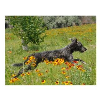 Lurcher Running Through A Flower Field - Postcard