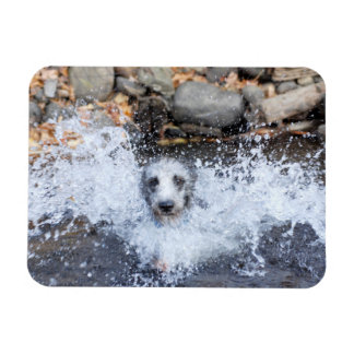 Lurcher Swimming Magnet | Male Lurcher Dog