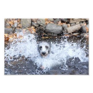 Lurcher Swimming Photo Print
