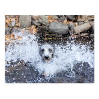 Lurcher Swimming Postcard