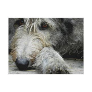 Lurcher Up Close - Canvas