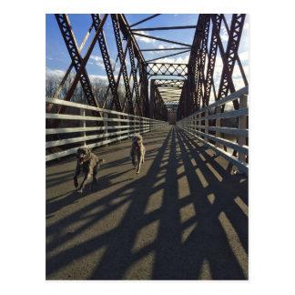 Lurchers Running Across A Bridge - Postcard