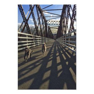 Lurchers Running Across A Bridge - Print