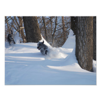 Lurchers Running Through The Snow - Print
