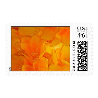 Luscious Orange Spring Flowers Postage