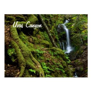 Lush California Waterfall Postcard