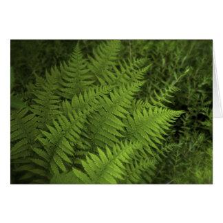 Lush Ferns Greeting Card