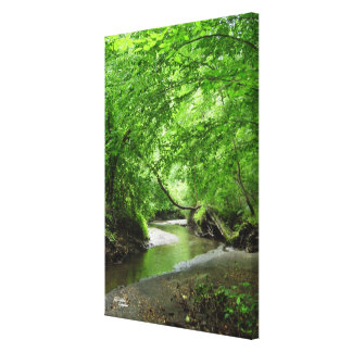 Lush forest stream Stretched Canvas Print