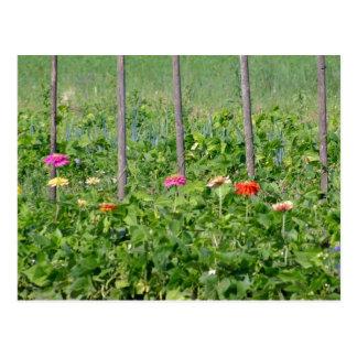 Lush Garden Postcard