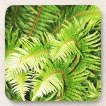 Lush green fern leaves drink coaster