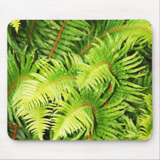Lush green fern leaves mouse pad