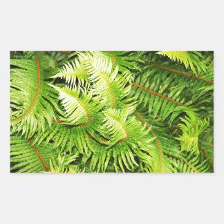 Lush green fern leaves rectangular sticker