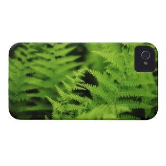 Lush Green Ferns iPhone 4 Case