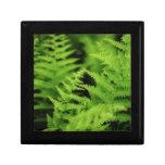 Lush Green Ferns Keepsake Box
