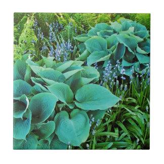 Lush green hosta and fern plant garden small square tile