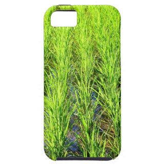 Lush Green Rice Paddy Fields Bali – iPhone 5 case