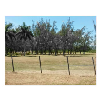 Lush Greenery of Montego Bay Jamaica Postcard