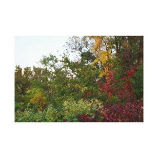 Lush multicolor trees canvas print