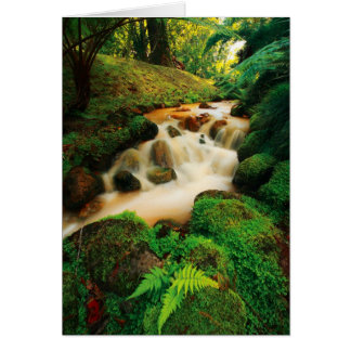 Lush Natural Colors Greeting Card