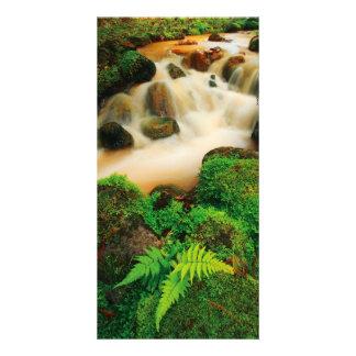 Lush Natural Colors Photo Card