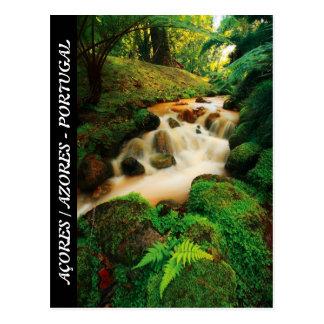 Lush Natural Colors Postcard