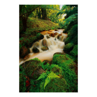 Lush Natural Colors Poster