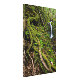 Lush Rain Forest and Waterfall Gallery Wrap Canvas