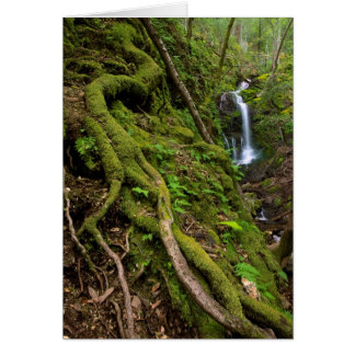 Lush Rain Forest and Waterfall Greeting Card