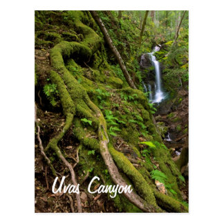 Lush Rain Forest and Waterfall Postcard