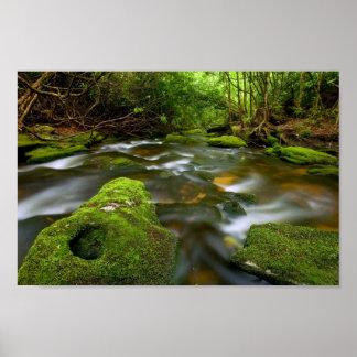 Lush Rain Forest Stream Poster